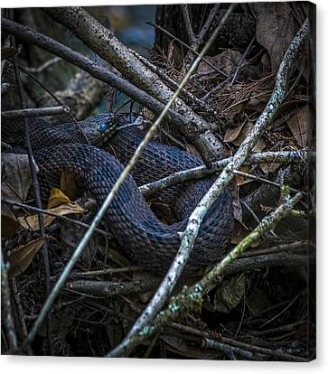Shedding Time Canvas Print by Marvin Spates
