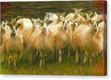 Sheep At Hadrian's Wall Canvas Print