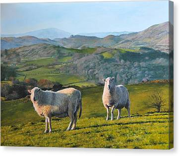 Canvas Print featuring the painting Sheep At Rhug by Harry Robertson