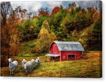 Charming Cottage Canvas Print - Sheep At The Red Barn In Autumn by Debra and Dave Vanderlaan