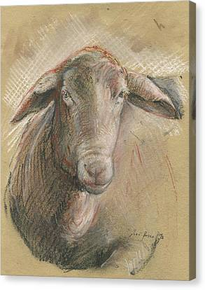 Sheep Head Canvas Print by Juan Bosco