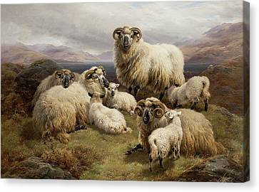 Sheep In A Highland Landscape Canvas Print by William Watson