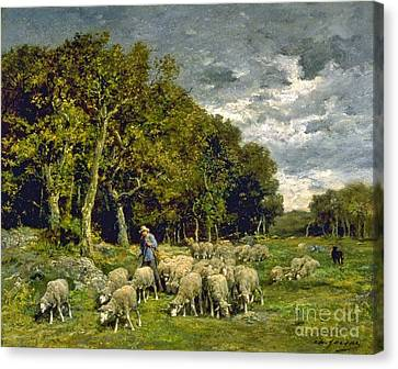 Sheep In A Pasture Canvas Print