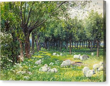 Sheep In An Orchard At Springtime Canvas Print by Louis Fairfax Muckley