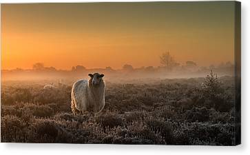 Sheep In The Mist Canvas Print by Rijko Ebens