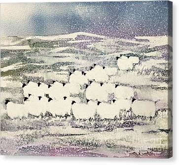 Sheep In Winter Canvas Print by Suzi Kennett