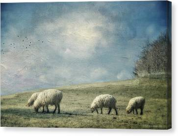 Sheep On The Hill Canvas Print by Kathy Jennings