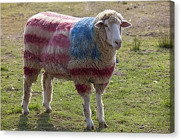 Dye Canvas Print - Sheep With American Flag by Garry Gay