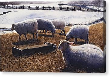 Sheepish Canvas Print by Denny Bond