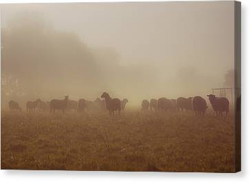 Sheeps In The Mist Canvas Print by Chris Fletcher