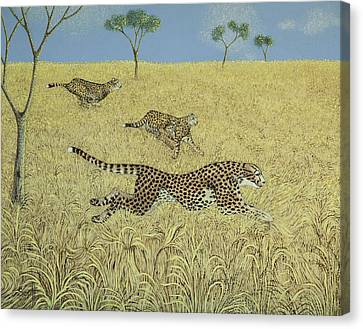 Cheetah Canvas Print - Sheer Speed by Pat Scott
