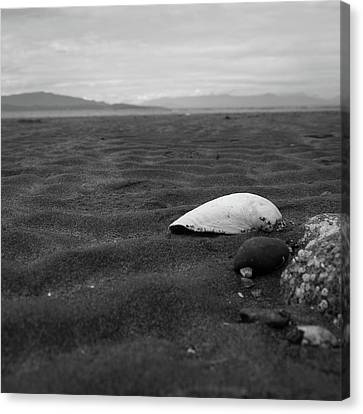 Shell And Sand Canvas Print