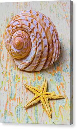 Nature Study Canvas Print - Shell And Starfish by Garry Gay