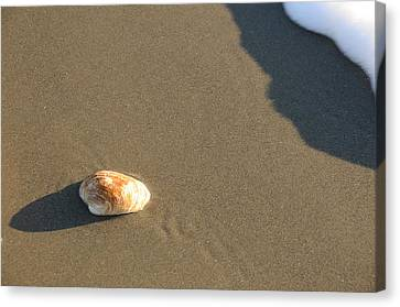 Shell And Waves Part 2 Canvas Print by Alasdair Turner