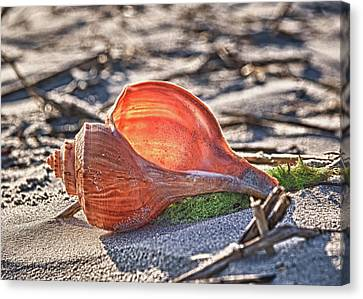 Shell In The Sun Canvas Print by Mike Covington