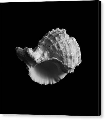 Shell No.3 Canvas Print