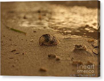Shell  Canvas Print by Olivia Narius