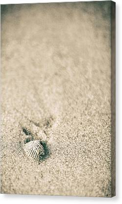 Canvas Print featuring the photograph Shell On Beach Alabama  by John McGraw