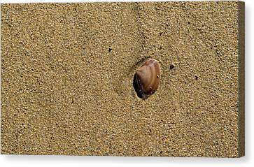 Shell On Beach Canvas Print by Steven Ralser