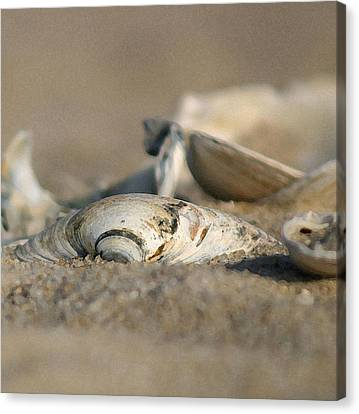 Shell Pile Canvas Print by Mary Haber