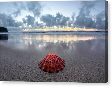 Shell Rise Canvas Print