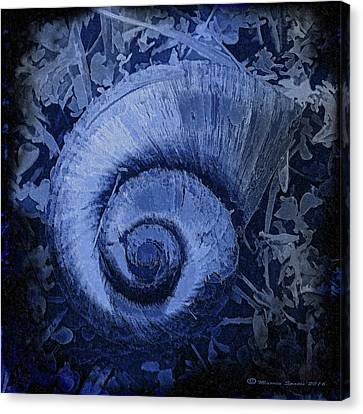Shell Series 3 Canvas Print by Marvin Spates