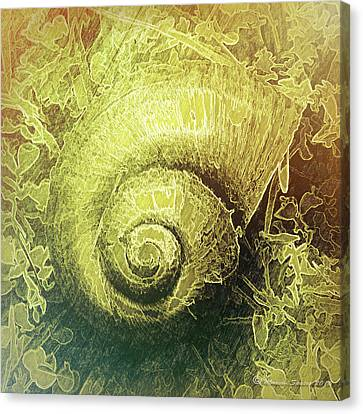 Shell Series 4 Canvas Print by Marvin Spates