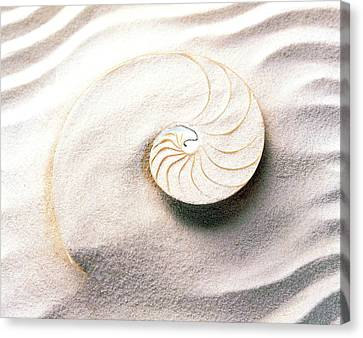 Wavy Canvas Print - Shell Spiraling Into Wavy Sand Pattern by Panoramic Images