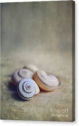 Shell Still Life Canvas Print by Lyn Randle