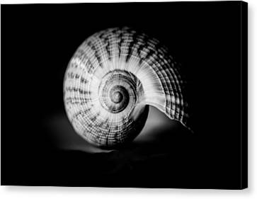 Shell Study No. 001 Canvas Print