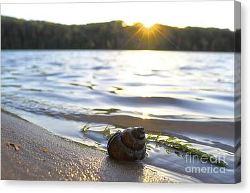 Shell Sunset Canvas Print
