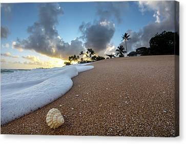 Shell Surprise Canvas Print