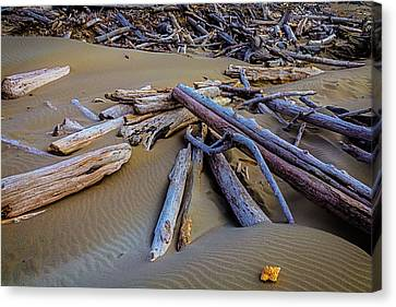 Shell With Driftwood Canvas Print by Garry Gay