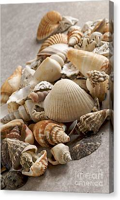 Shellfish Shells Canvas Print by Bernard Jaubert