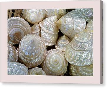 Shells - 4 Canvas Print