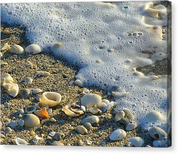 Shells And Seafoam Canvas Print