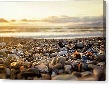 Canvas Print featuring the photograph Shells At Sunset by April Reppucci