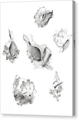 Saint Hope Canvas Print - Shells by Chris N Rohrbach