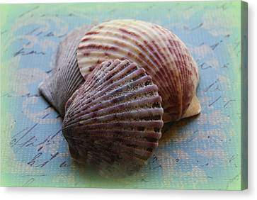 Shells Canvas Print by Diane Reed