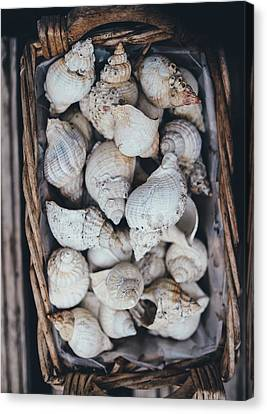Shells Canvas Print by Happy Home Artistry