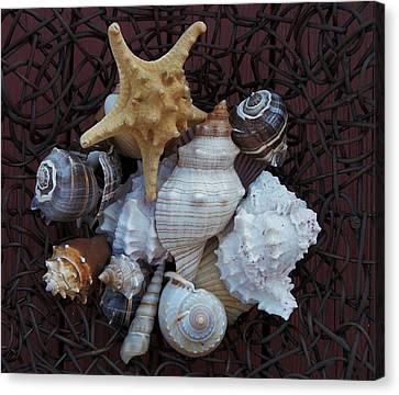 Shells In A Basket Ll Canvas Print by Marsha Heiken
