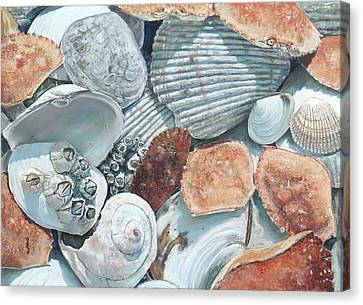 Shells Of The Puget Sound Canvas Print