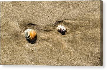 Shells On Beach Canvas Print by Steven Ralser