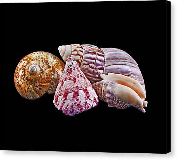 Canvas Print featuring the photograph Shells On Black by Bill Barber