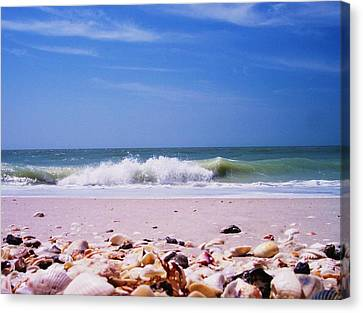 Shells On The Shore Canvas Print