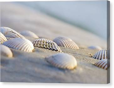 La Jolla Art Canvas Print - Shells  by Peter Tellone