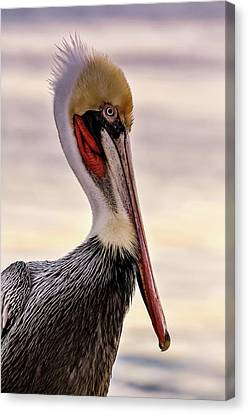 Shelter Island's Pelican Canvas Print by Martina Thompson