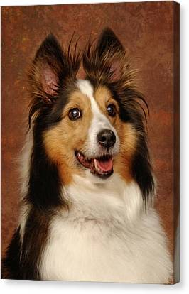 Canvas Print featuring the photograph Sheltie by Greg Mimbs