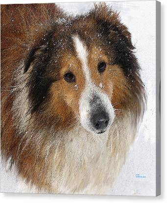 Sheltie In The Snow Canvas Print by Jane Schnetlage
