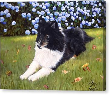 Shetland Sheepdog Canvas Print - Sheltie In The Sun by Alexandra Cech